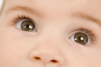 leniwe oko